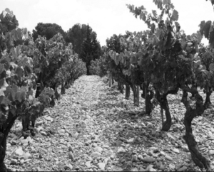 clos-du-caillou-grapes