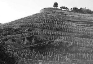 domaine-georges-vernay-feild