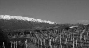 domaine-nerantzi-grapes