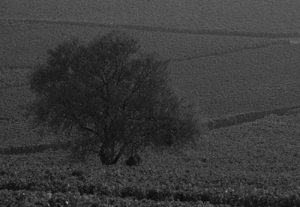 perrot-minot-tree