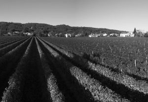 Prosecco Vineyards Case Paolin