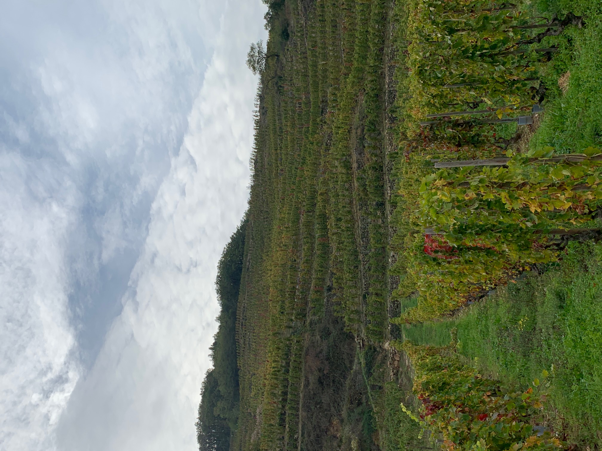 Domaine Jolivet Vineyards